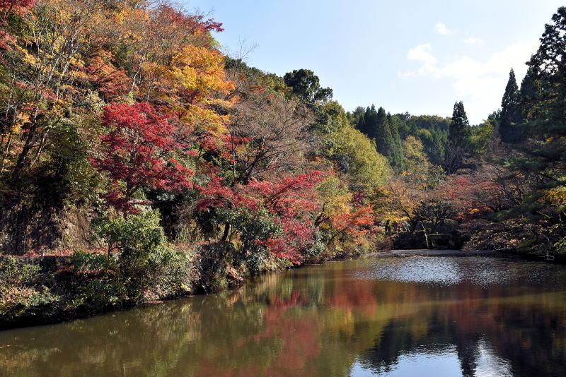 宝生寺の紅葉