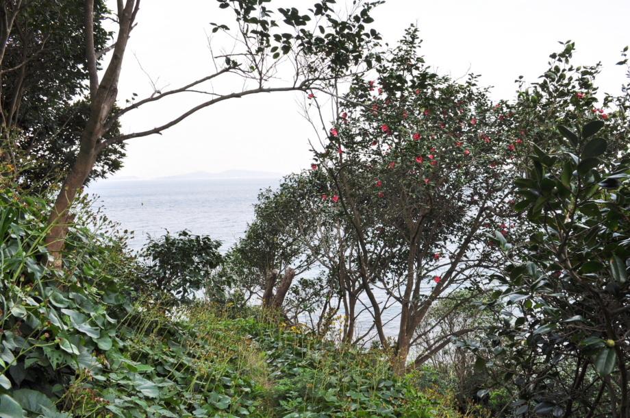 無垢島 椿山